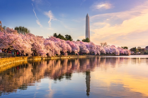 The Best Places to Propose in Washington D.C. - Dominion Jewelers